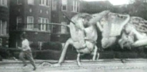 grasshopperBig